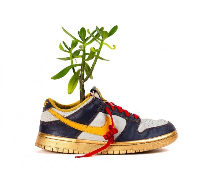 Vaso Sneaker I