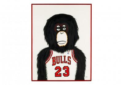 Monkey NBA - Chicago Bulls
